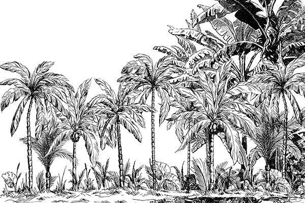Papier peint jungle Palmiers noir et blanc