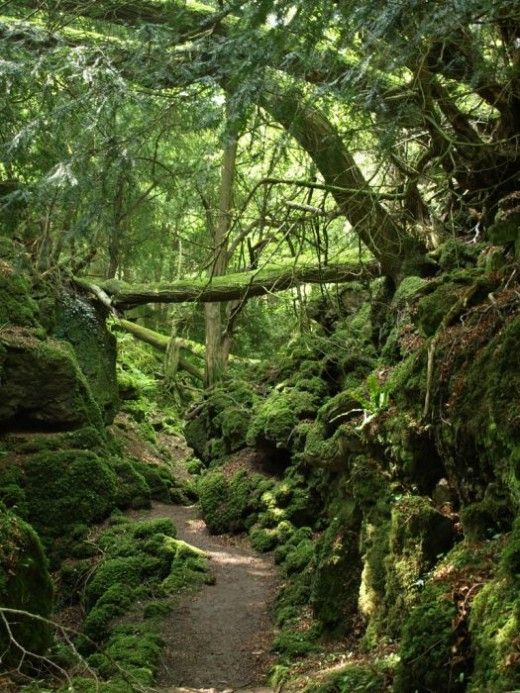 Puzzlewood. Said to be one of J.R.R. Tolkien's inspirations for Middle-earth.