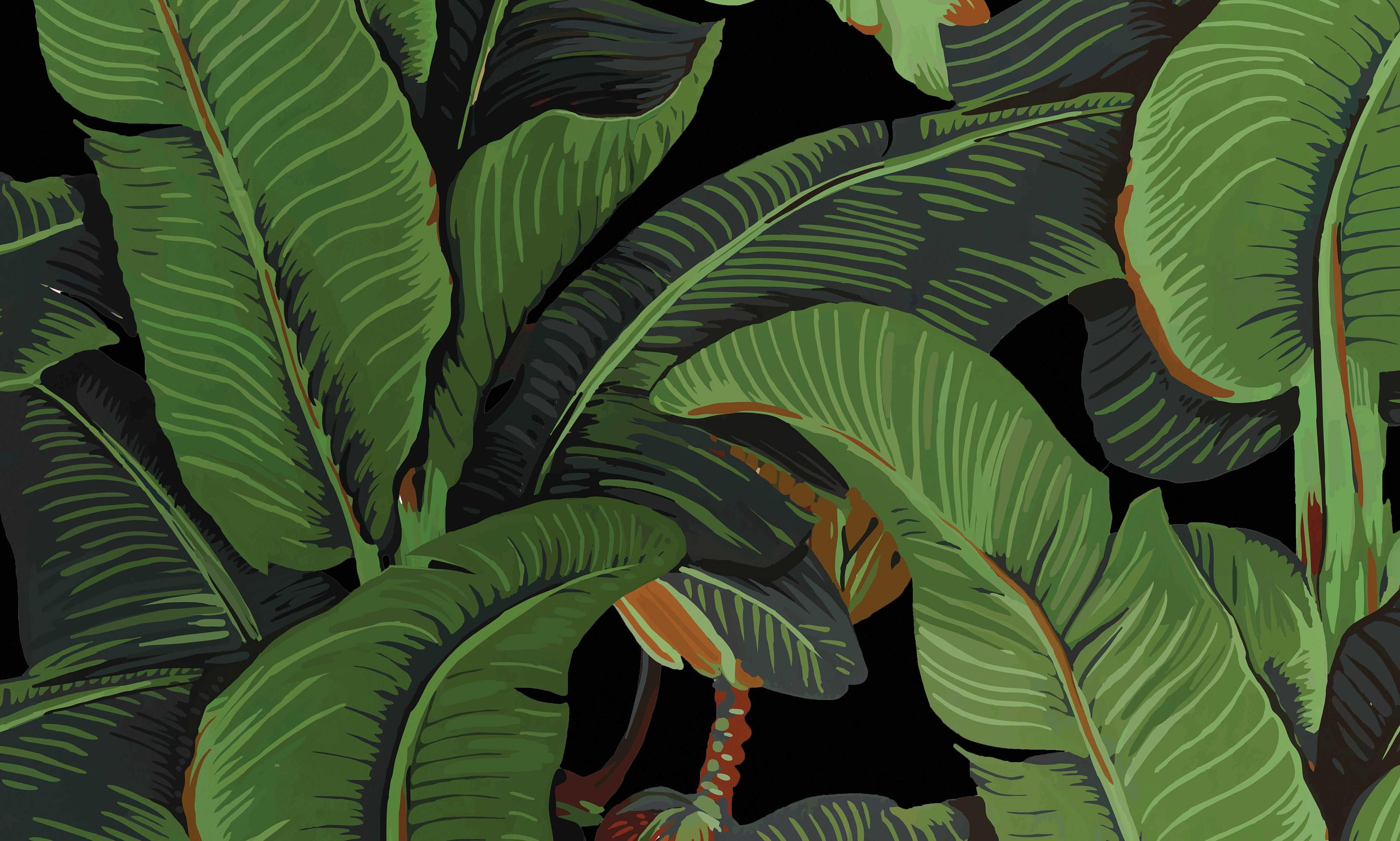 Black banano leaf wallpaper Black Banana Leaves Banana