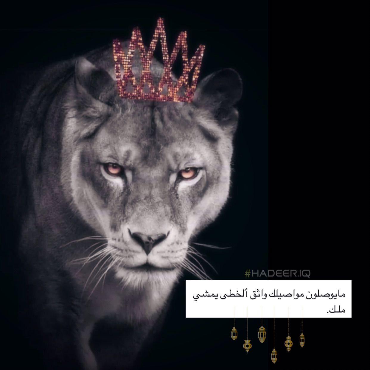 لبوه اسد قوه Love Quotes Wallpaper Islamic Posters Love Quotes Photos