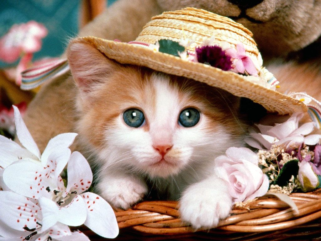 Cat In A Hat With Images Cute Cat Wallpaper Funny Cat