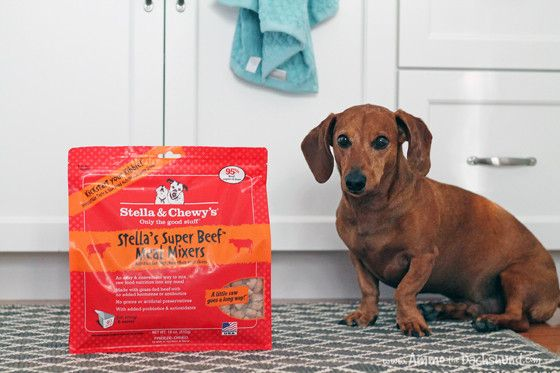 Adding Raw to Your Dog's Diet with Stella & Chewy's Meal