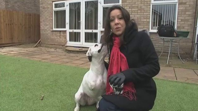 ITV Anglia News covered the story about Milly winning Face of 2015 #dogtogUK #milly2015