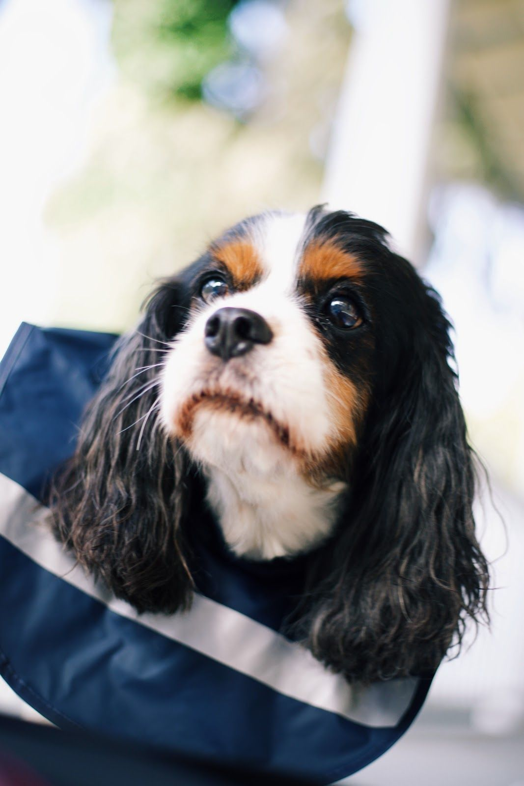 Happy Friday from one of favorite furry friends modeling the Doggie New Englander! Available in XS-XL and featuring a back pocket to store their favorite treats for being such a good boy!