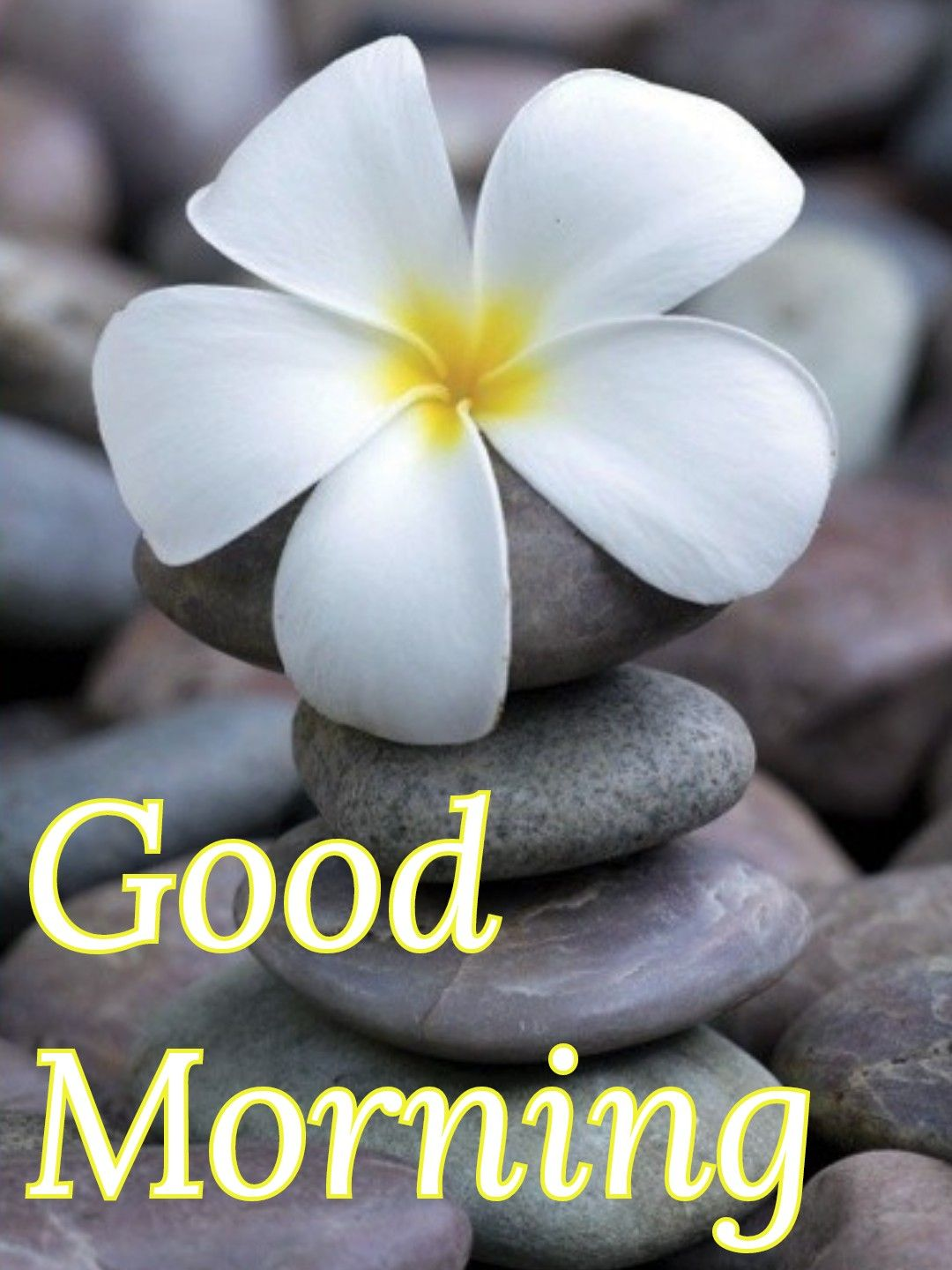 pin by vinayak shetty on good morning rock cairn love flowers