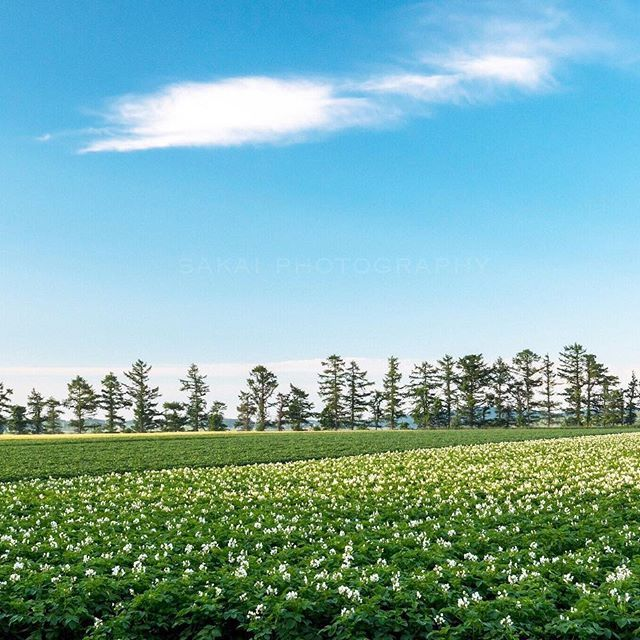 [New] The 10 Best Photography Ideas Today (with Pictures) -  じゃがいもの畑が綺麗 _ #北海道 #風景 #風景写真 #じゃがいも #朝 #hokkaido #photography #landscape #landscapephotography #nature #naturephotography #landscapelovers #tokyocameraclub #yourshotphotographer #natgeo #igersjp #ig_japan #art #artwork #instaart #artphotography #instaart #landscaper #artistsoninstagram #hokkaidolikers #landscapehunter #landscapes #landscape_capture #landscapehunter #photographylovers #写真好きな人と繋がりたい #ファインダー越しの私の世界