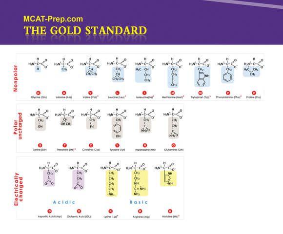 Biochemistry Macromolecules Summary I - Amino Acid MOLECULAR - amino acid chart