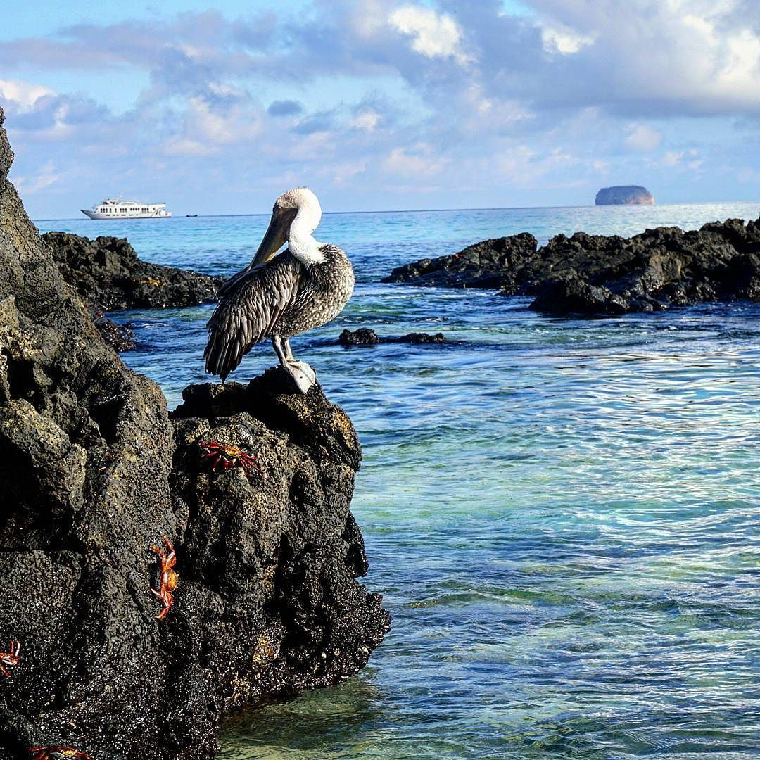 Watching all the crazy wildlife on Bacchus Beach is a must. For a complete guide to the Galapagos and more cool animal pics check out my latest blog post...LINK IN BIO  @galapagosluxurycharters