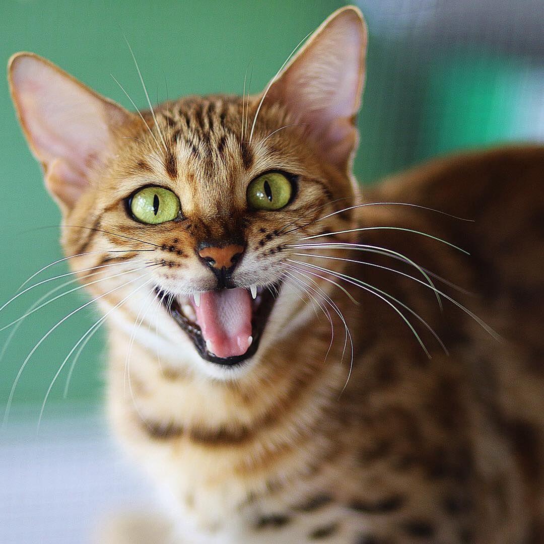 Good Mood vibes! 🍰🍵🌈☀️ ️ Happy Cat Funny Cat