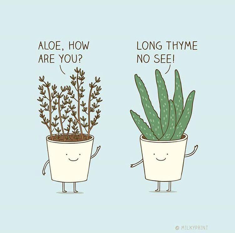 Plants Funny Puns Funny Illustration Plant Jokes