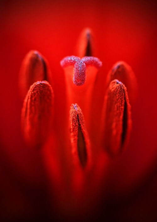 Macro Center Of A Red Flower Bewitchingbokeh In 2018
