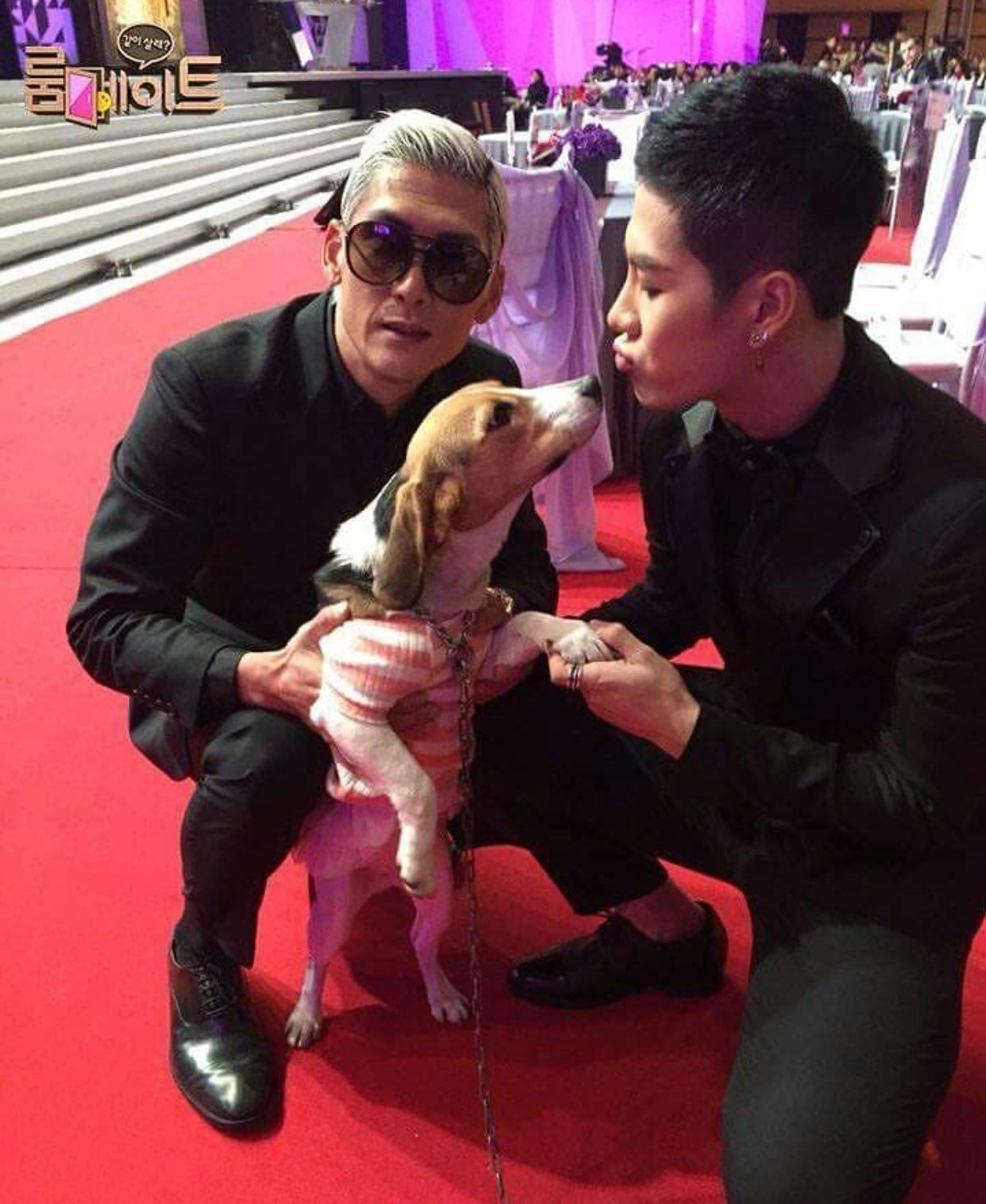 Pin By Ara On Jackson Jackson Wang Celebrity Dogs Jackson