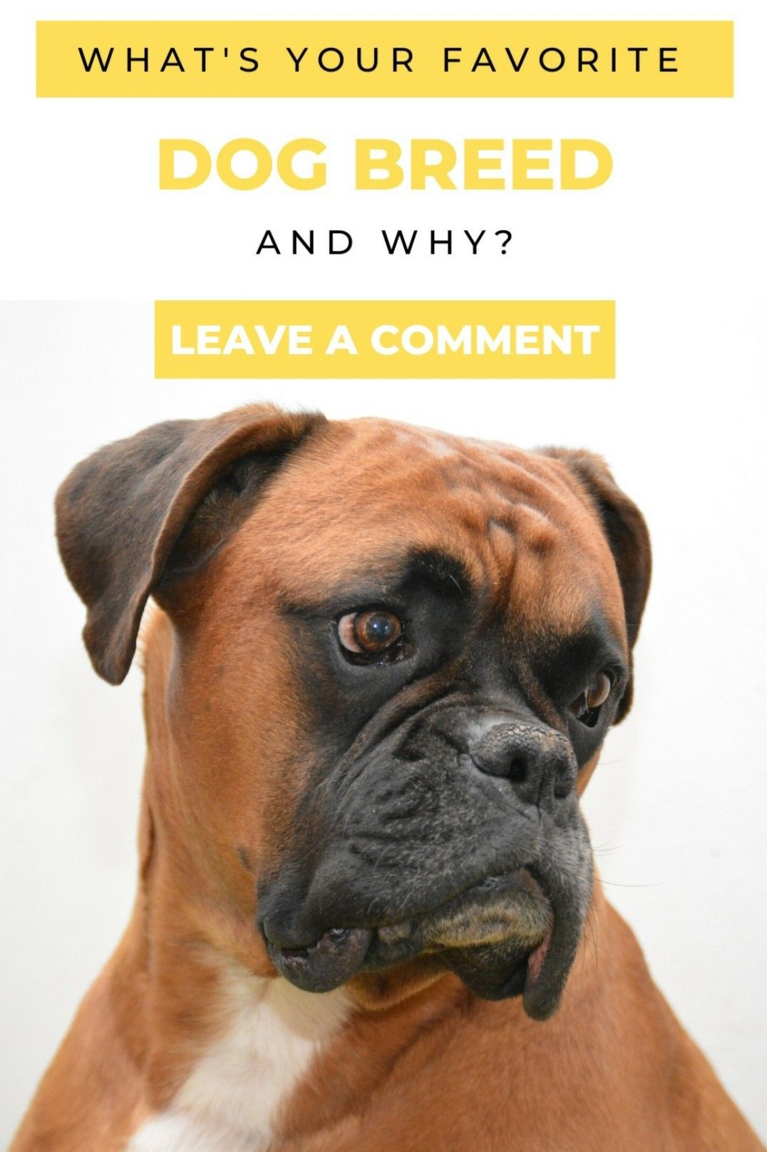 Pin On Dog Opinions