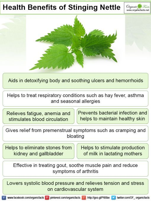 Some Of The Most Important Health Benefits Of Stinging Nettle Include Its Ability To Detoxify The Body Improve Stinging Nettle Health Benefits Stomach Ulcers