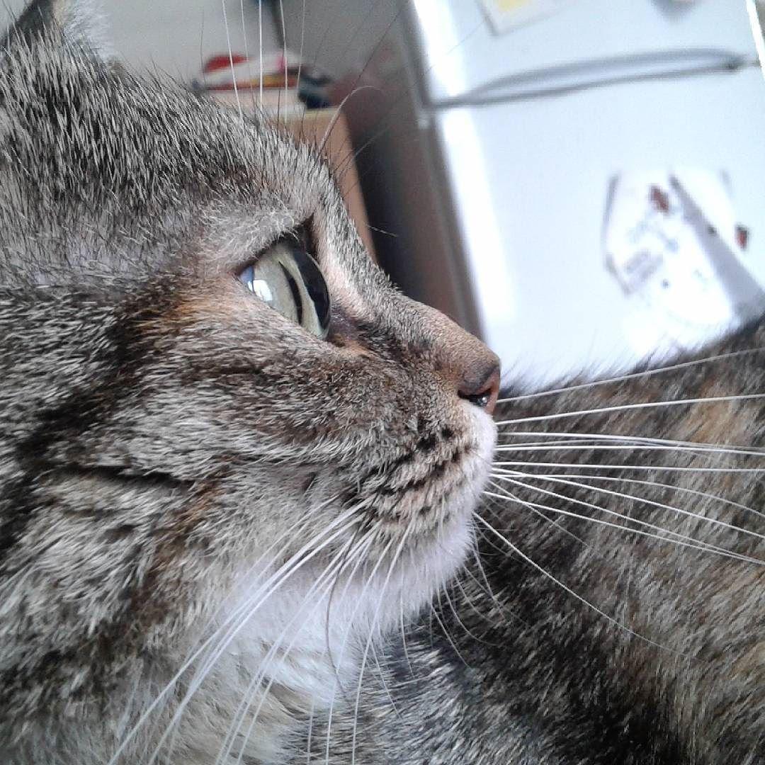 #cat #catstagram #micione #clelia #gatto #gatta #micia #micio #catstagram #catoninstagram #iloveyou #ilovemycattoomuch #ilovemycat #mypet #mylovelycat by gianbovenzi