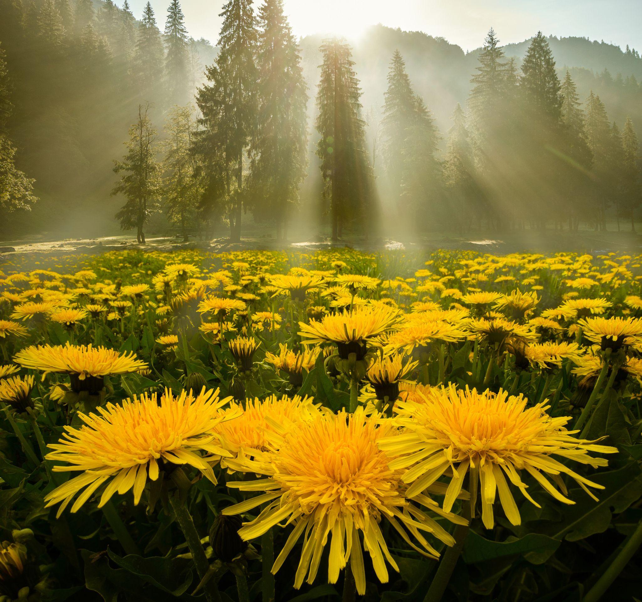 Яркие картинки с природой с добрым утром