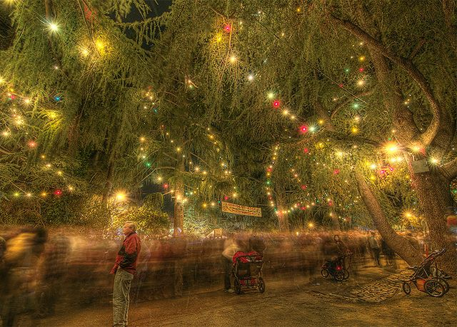 Beneath The Lights Of Christmas Tree Lane The River Of People Flows Christmas Lights Christmas Tree San Gabriel Valley