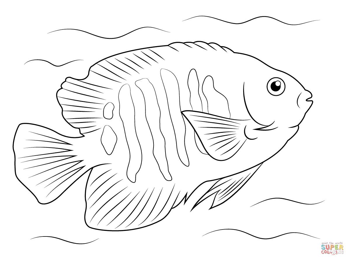 Flame Angelfish Super Coloring