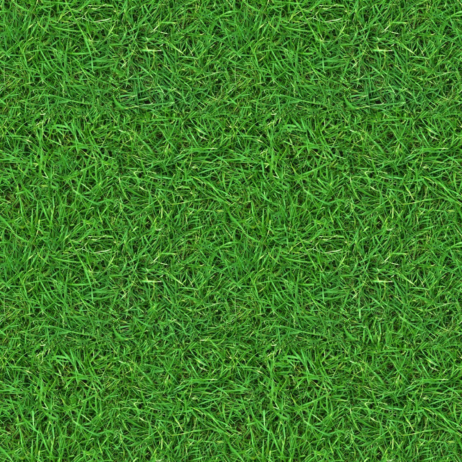Grass 2 seamless turf lawn green ground field texture for Garden grass