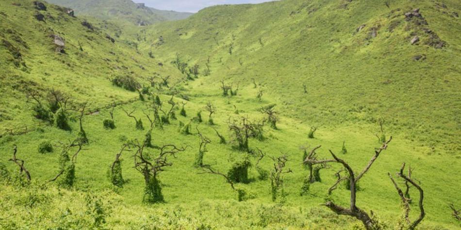 Resultado de imagen para Reserva Nacional Lomas de Lachay en Lima