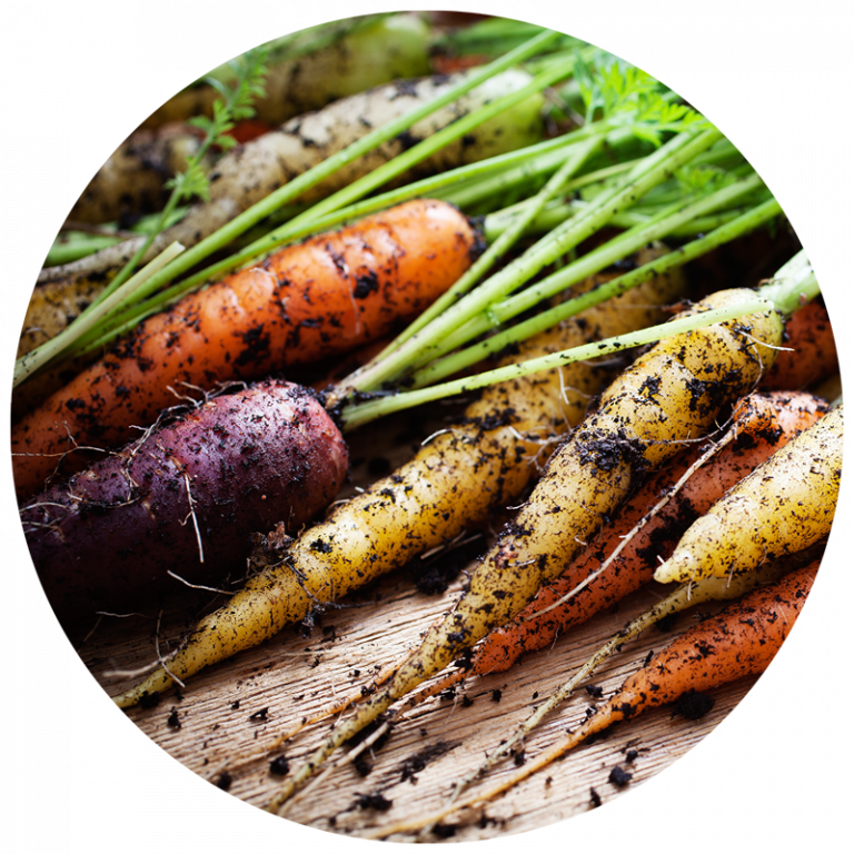Carrots - February 2017 Plant of the Month in 2020 ...
