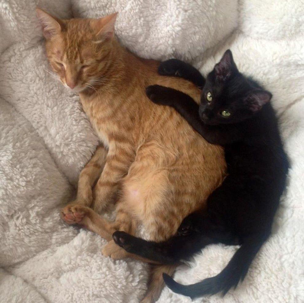 Best friends fur-ever.
