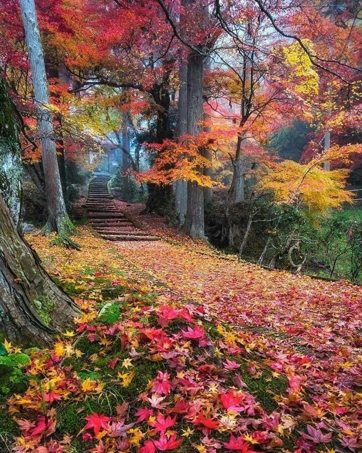 сразу выделил сказочная осень фото выбор