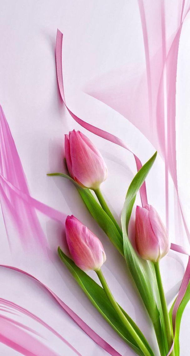 Wallpaper Bunga Tulip Bunga Desain