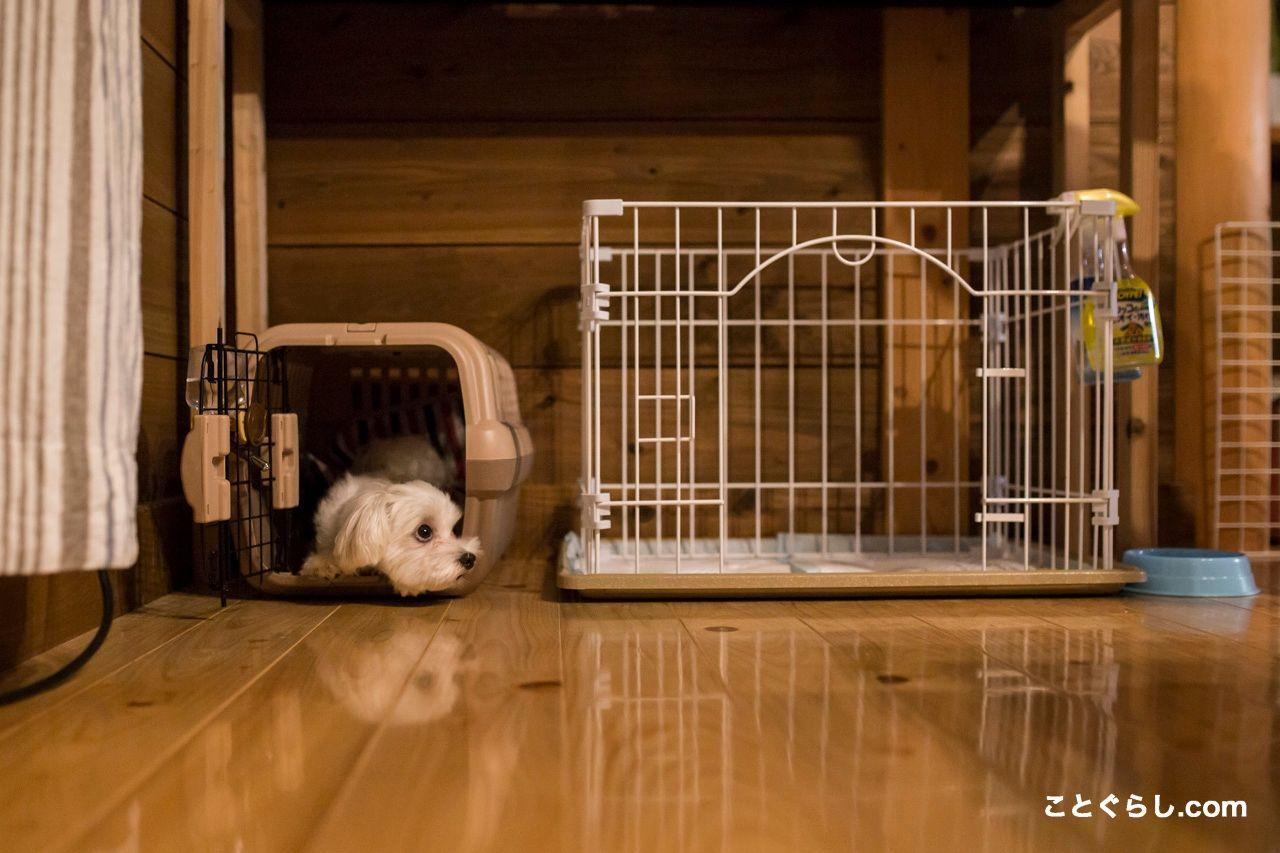 クレートトレーニングのやり方 方法 分離不安に悩まされているペットと飼い主さんへ ことぐらし 犬のトレーニング 犬 クレート クレート