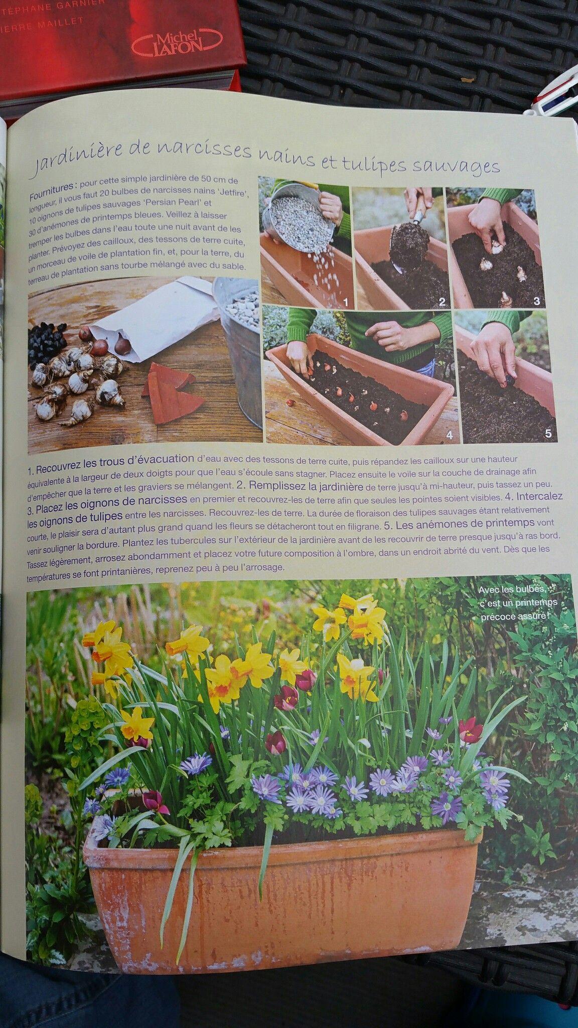 Jardinière de bulbes (narcisses nains et tulipes sauvages