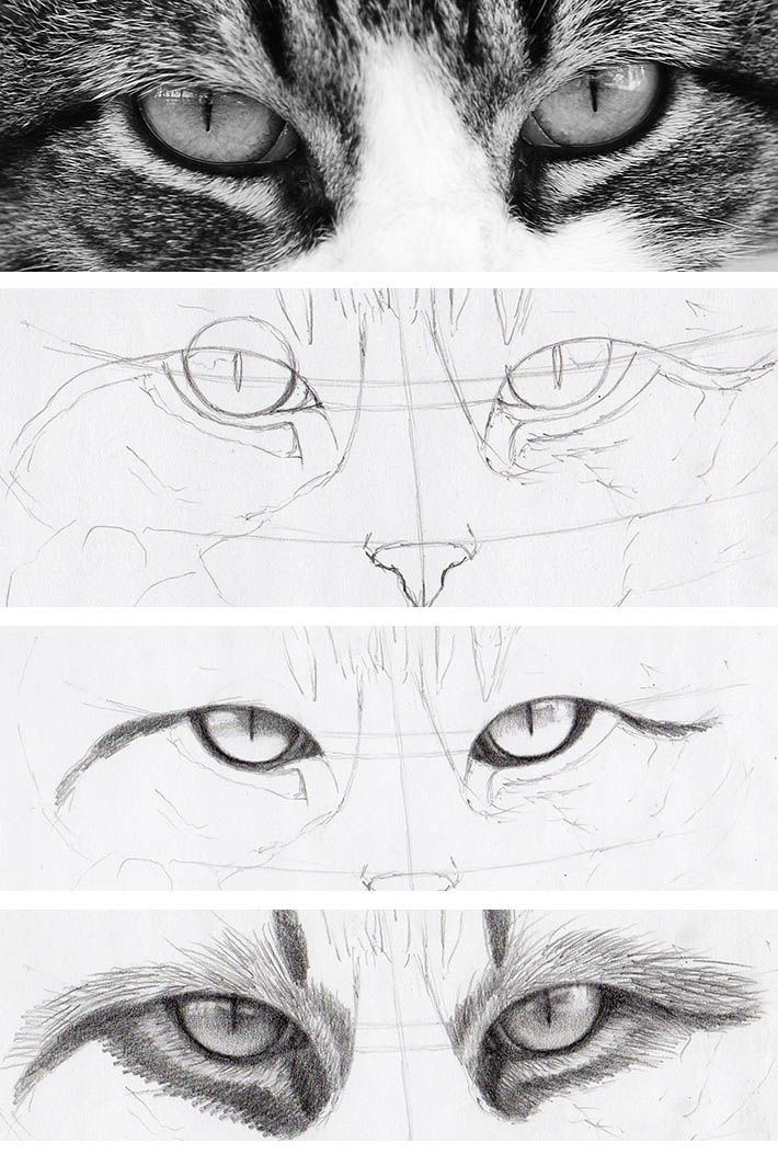 Do you think cat eyes are harder to draw than human eyes drawing them basically breaks down to the same steps learn how to draw cat eyes right meow