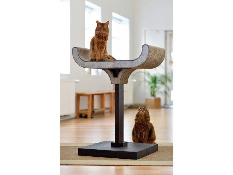 panier chat en hauteur