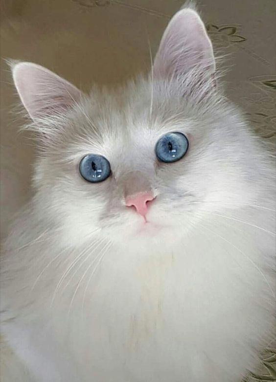 Cat Lovers World® (catsloversworld) Instagram Posts