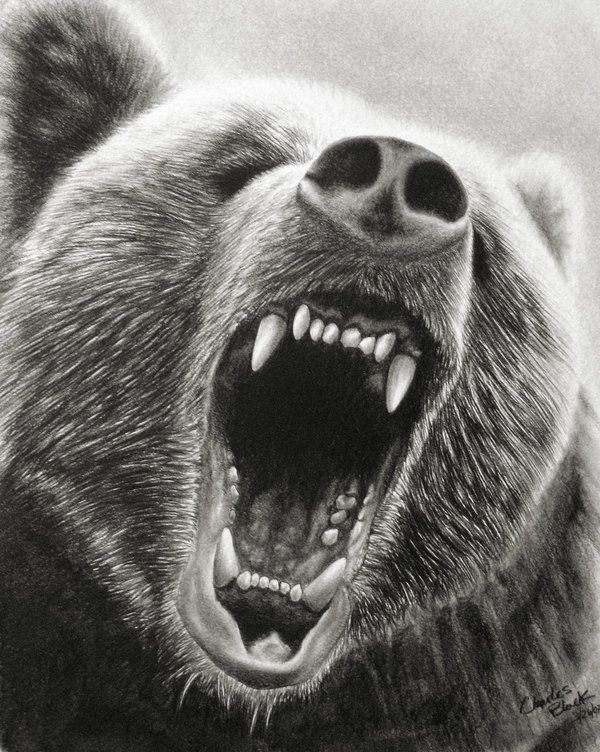 grizzly roar part 2 by eidolicdeviantartcom on