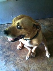 Grace is an adoptable American Bulldog Dog in Chipley, FL. Grace is a female, bulldog mix, 5-6 years old appears to have been well cared for and is very sweet around 45-50lbs. Has a docked tail and is...
