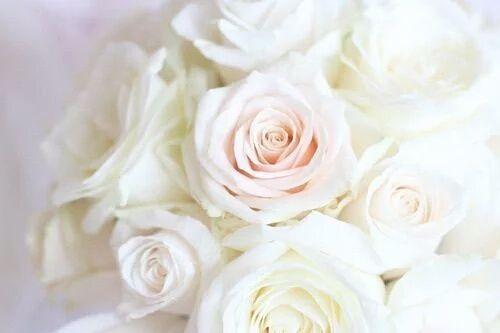 Imagem de rose, flowers, and white