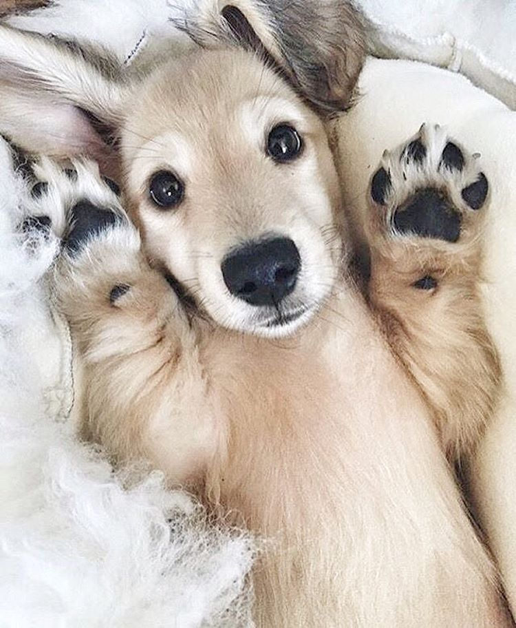 Paws Up Cute Animals Puppies Cute Baby Animals