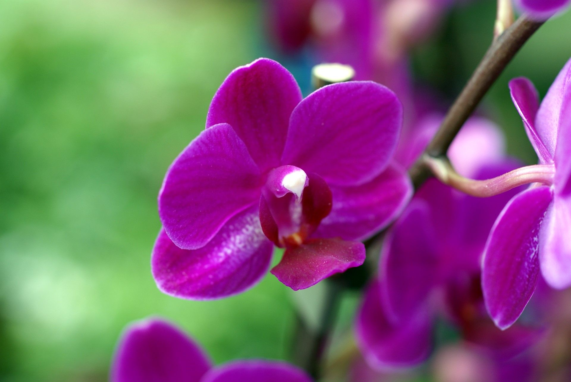 Violet orchid close up photo in high resolution ideal for violet orchid close up photo in high resolution ideal for wallpaper buycottarizona
