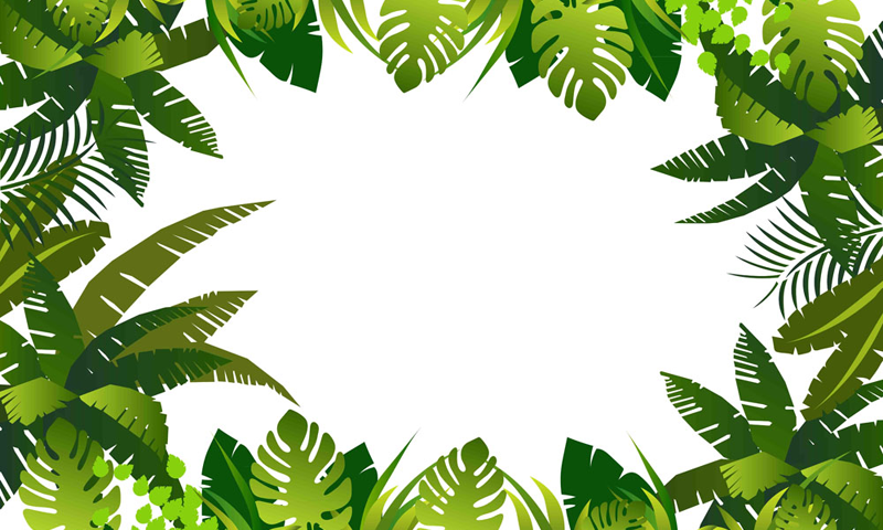 Image Title Plant Leaves Image Png