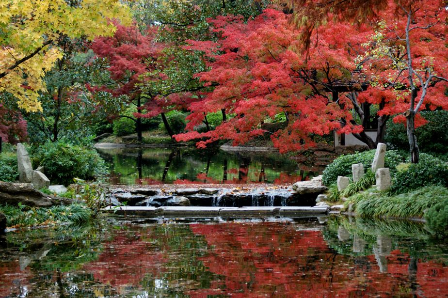 Autumn in the Japanese Gardens