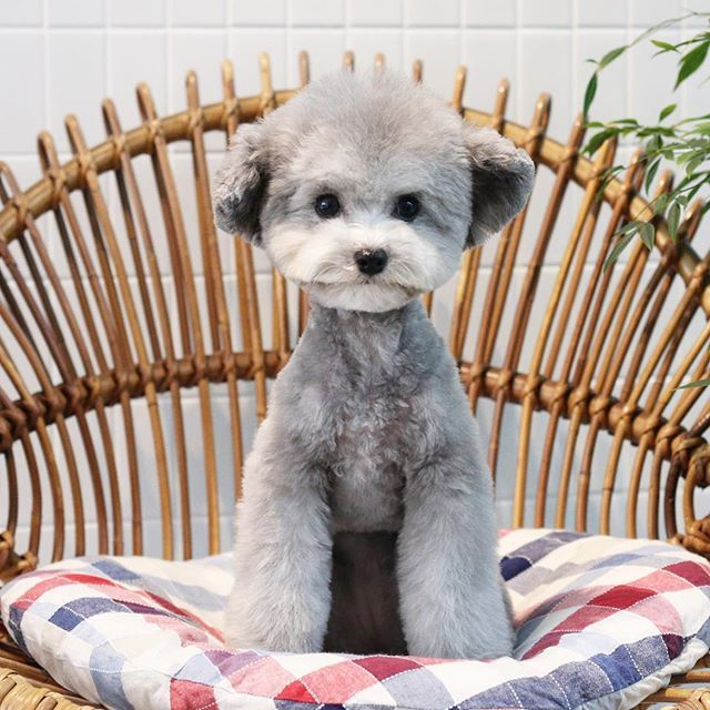 Instagram media by spicedogsss - . 장난꾸러기 꼬마남자애 같은 마느리 . . . 머리를 길러 묶어줘야 여자느낌이 나올까나... . . . #마늘 #20160228