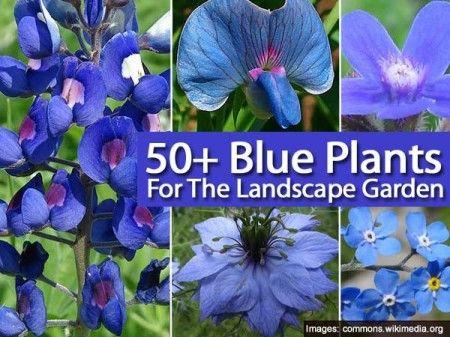 50 Blue Plants For The Landscape Garden Blue Plants Blue Flowers Garden Blue Garden