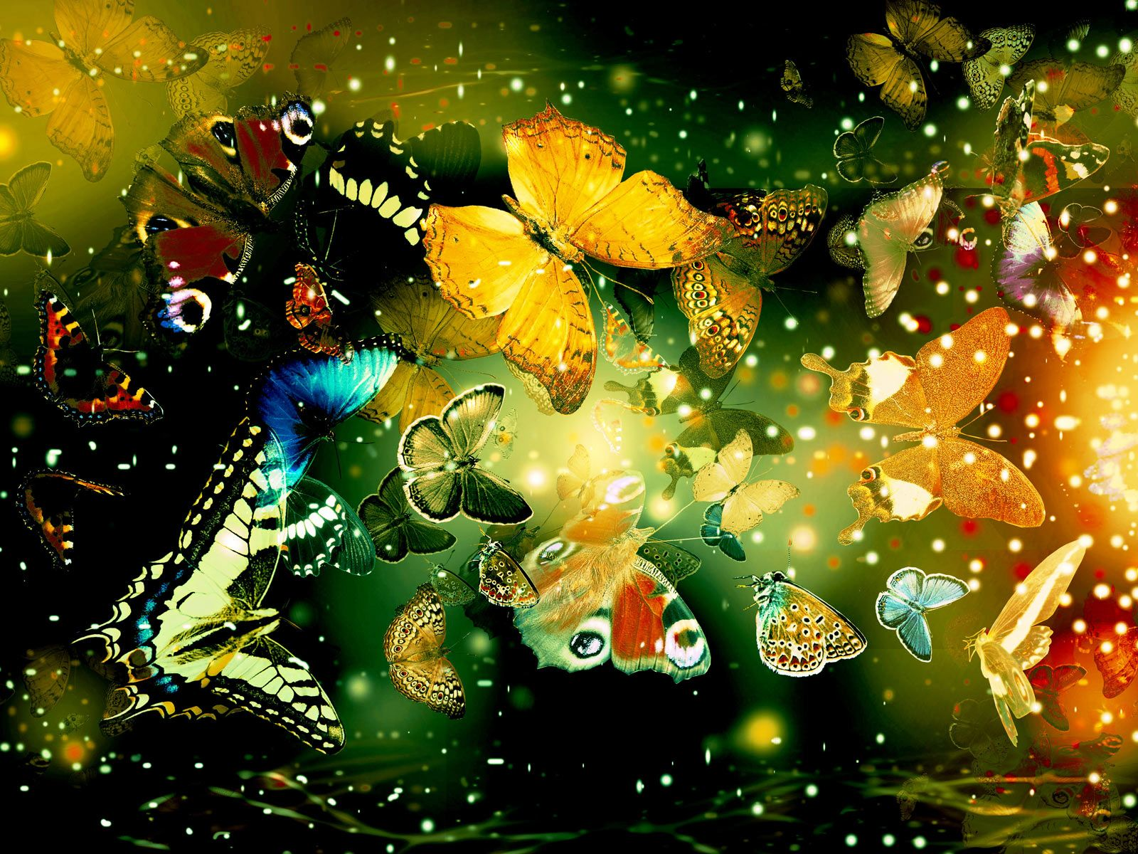 Backgrounds Everyone Can Like This Is The Most Viewed - Butterfly wallpaper for computer desktop