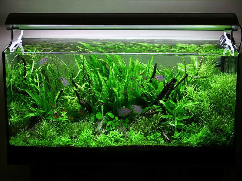 Asian jungle aquarium decoration themes planted aquarium for Planted fish tank