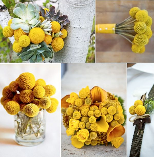 Yellow ball flower image collections flower decoration ideas wedding flowers with yellow billy balls weddings by lilly wedding flowers with yellow billy balls weddings mightylinksfo