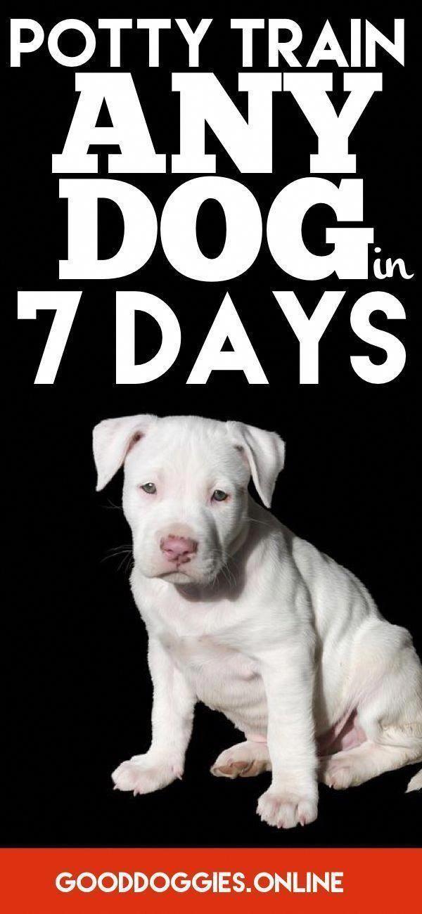Ilovemydoggy Dogsruletheworld Dogsmakeeverythingbetter Bestdogever Bestdogontheplanetearth Bestdogint In 2020 Dog Training Obedience Dog Training Training Your Dog