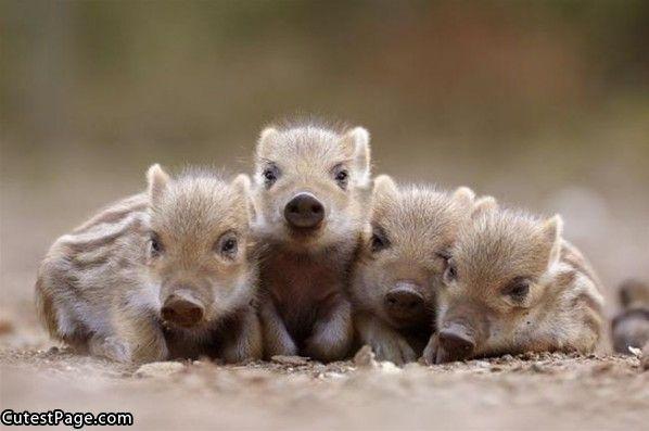Sweet little piggies!