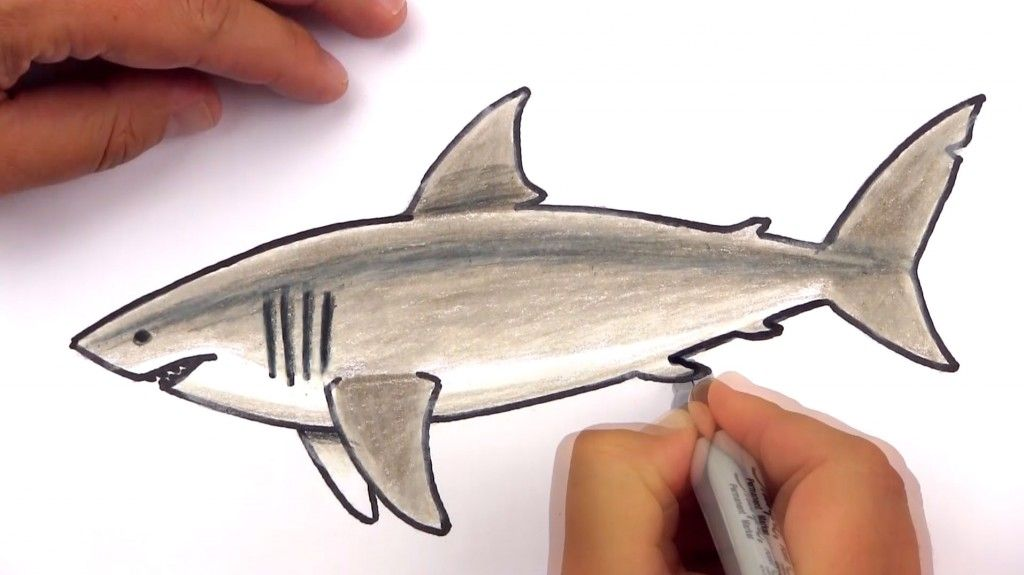 How To Draw A Realistic Great White Shark (Art Club Members ...