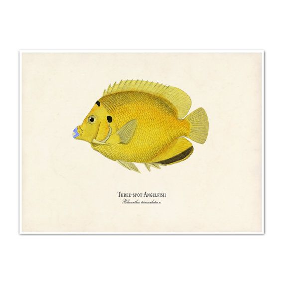 Yellow Fish Art Print Fish Poster Tropical by AdamsAleArtPrints ...