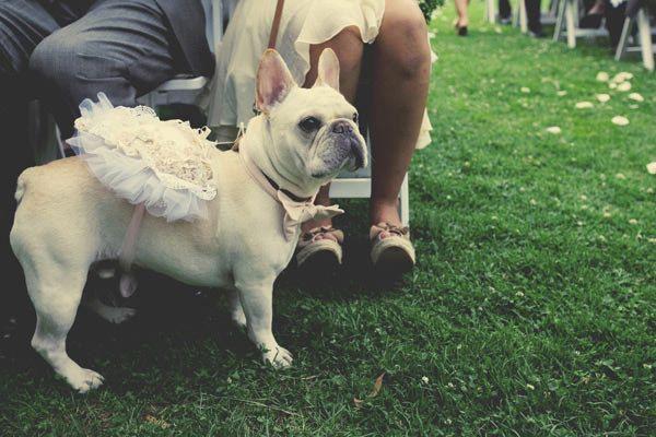French Bulldog Serves As Flower Girl And Ring Bearer Hochzeit Hunde